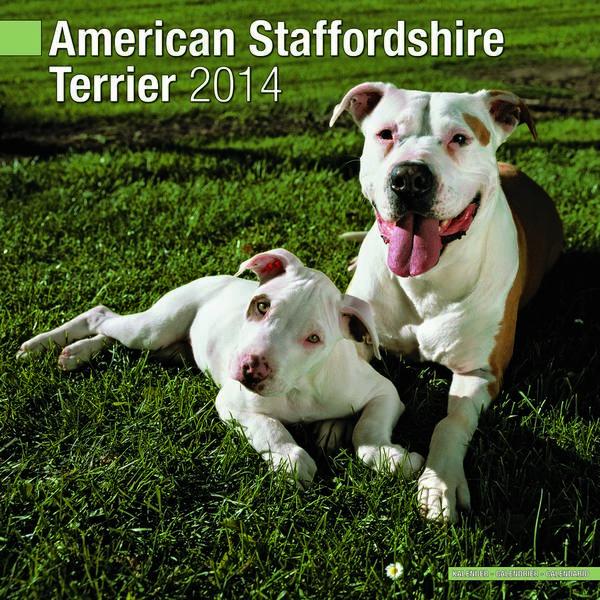 American Staffordshire Terrier Calendar 2015 10007-15 ... American Staffordshire Terrier 2014