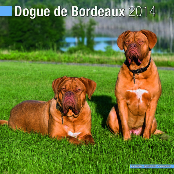 The westminster kennel club breed information dogue de for Discotheque a bordeaux