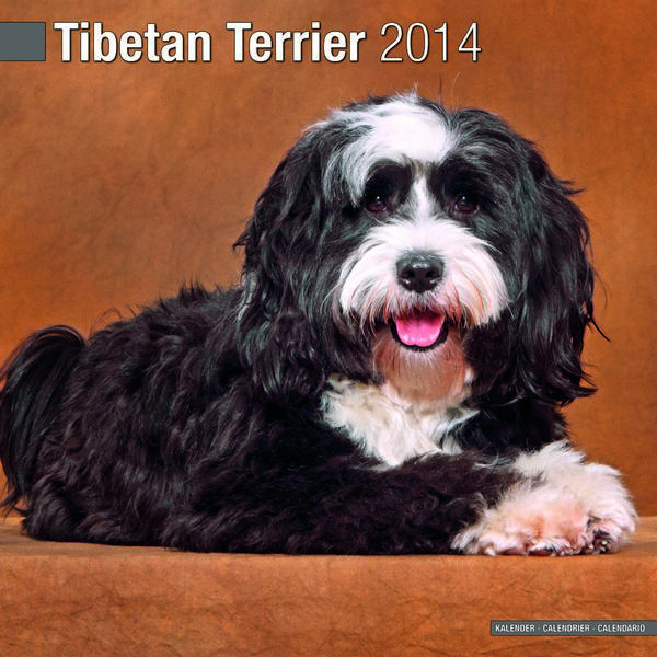 Tibetan Terrier Rmation And Pictures