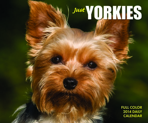 Just Yorkies Box Calendar 2014 9781623430207