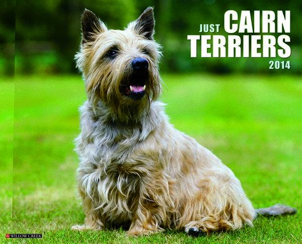 Just Cairn Terriers 2010 Calendar downloads - Vidhatri