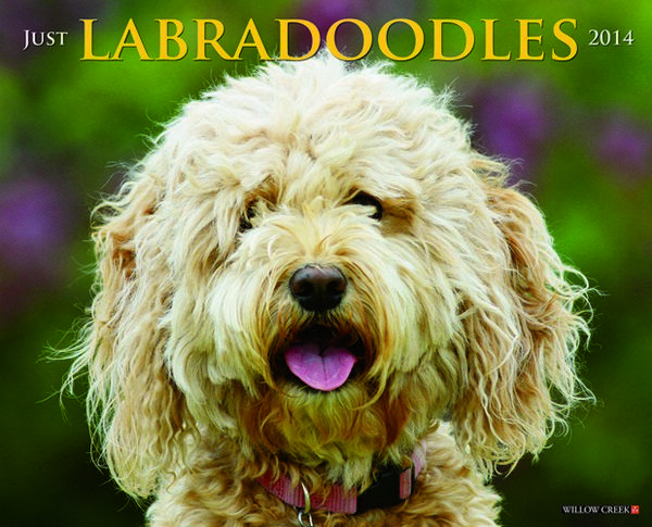 Labradoodles 2014 Wall Calendar Willow Creek Press
